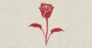Роза для вашей женщины
