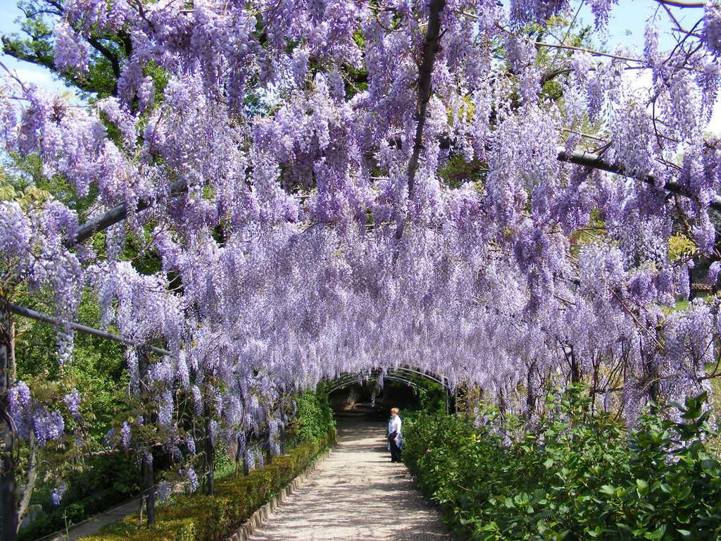 Сады Бардини - топ достопримечательностей Флоренции